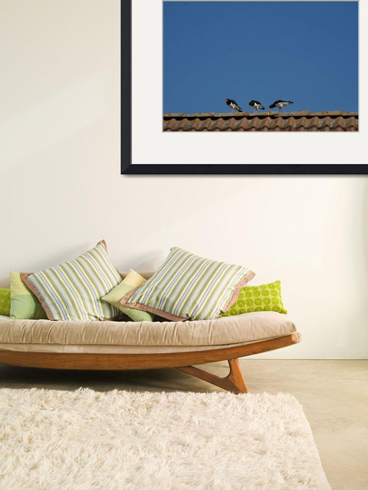 """""""The three oystercatchers&quot  (2009) by Chronos"""