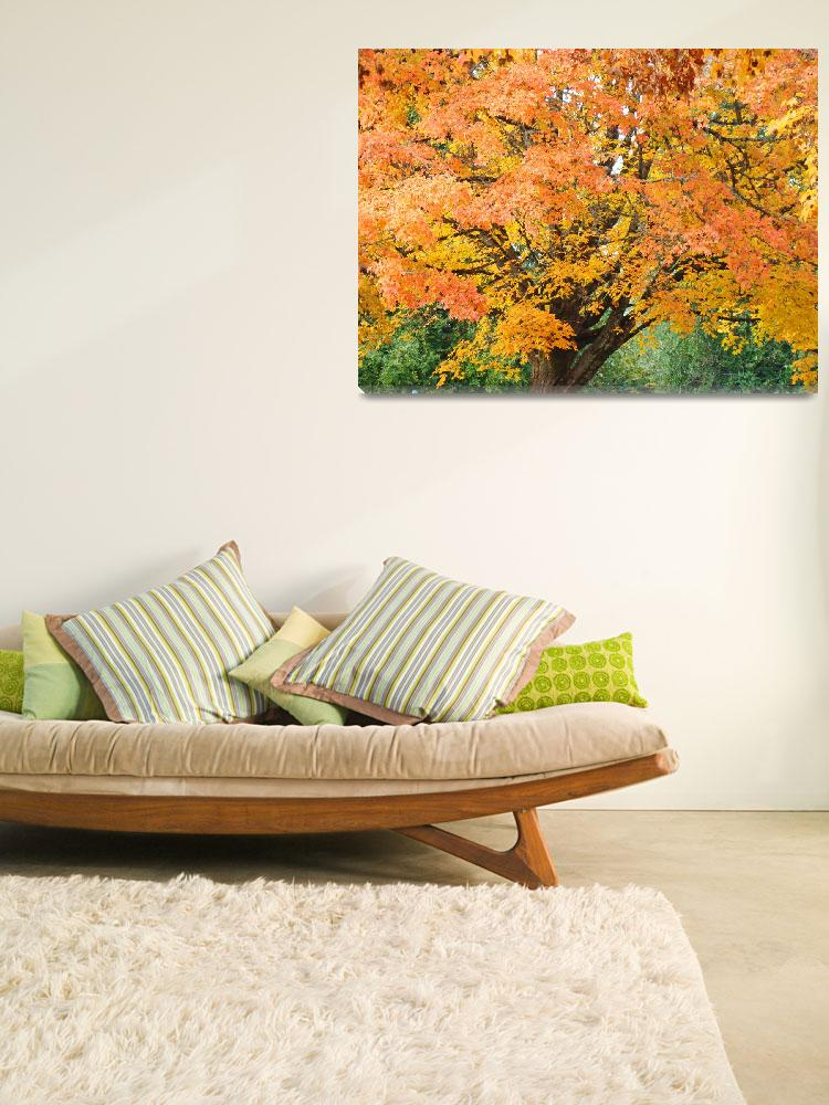 """""""Big Autumn Tree in Park Orange Yellow Leaves""""  (2014) by BasleeTroutman"""