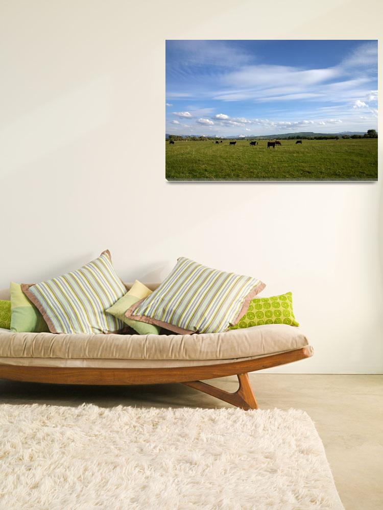 """Rocky Mountain Pasture""  (2006) by Landscapes"