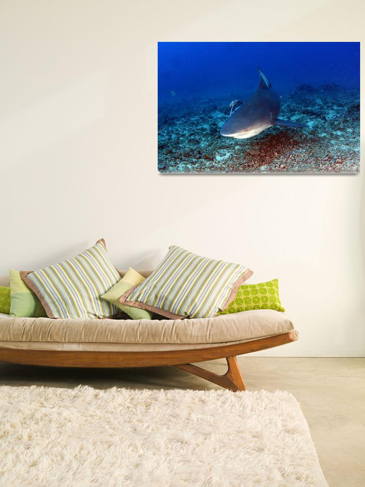 """""""Shark Encounter&quot  (2011) by The_World_Underwater"""