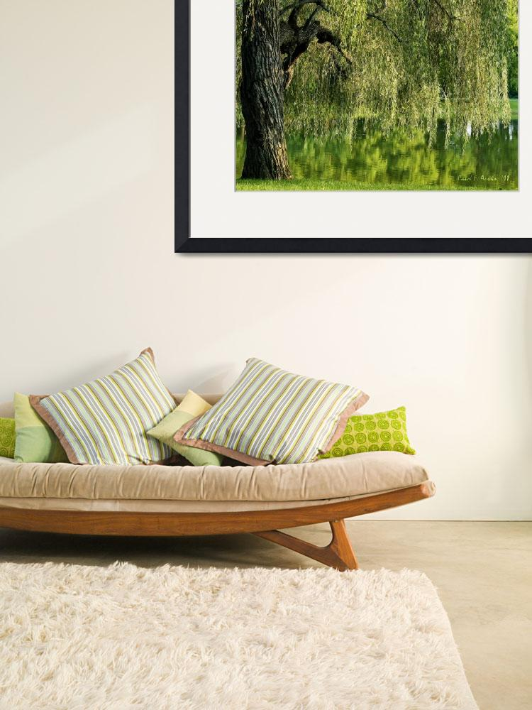 """""""Weeping Willow Tree and Pond Meditation Wall Art&quot  (2011) by PhotographsByCarolFAustin"""