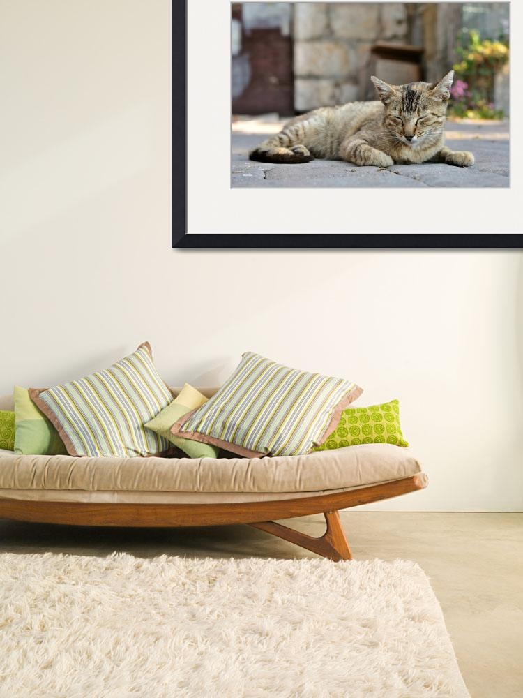 """""""Tabby cat&quot  (2013) by creative_photography"""