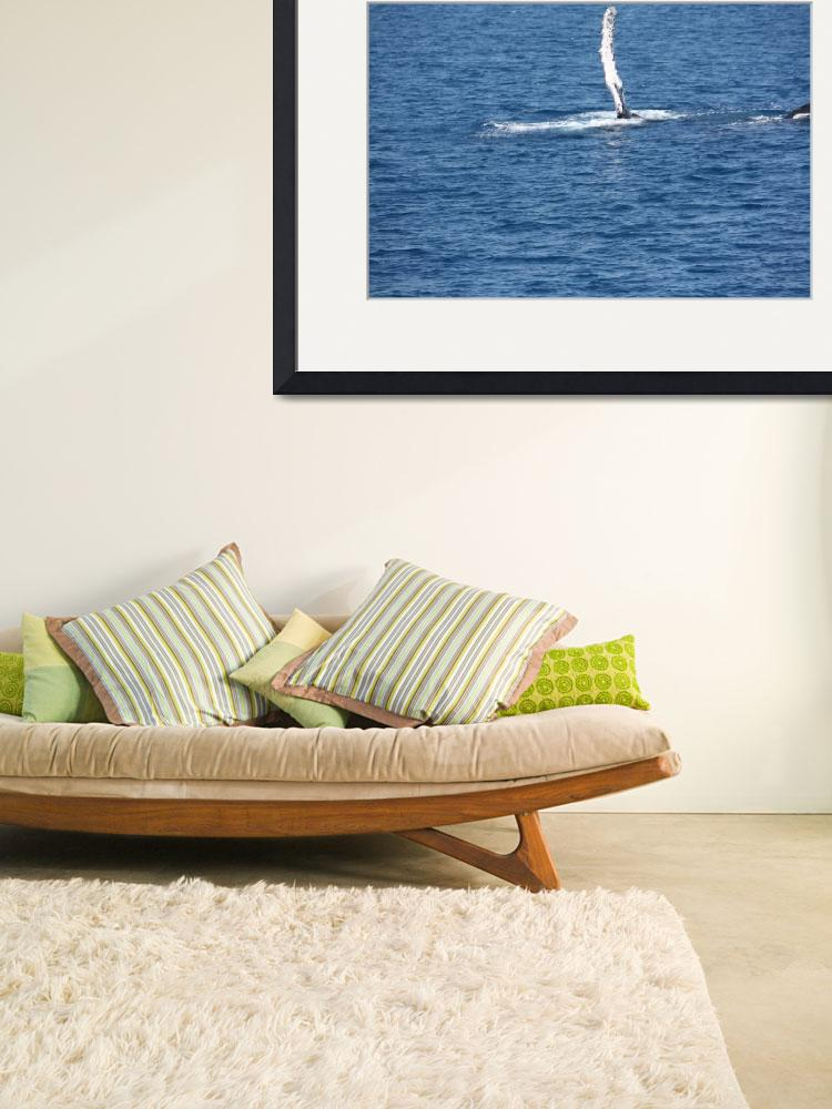 """""""NaP_ Whale Watching094&quot  by nevilleprosser"""