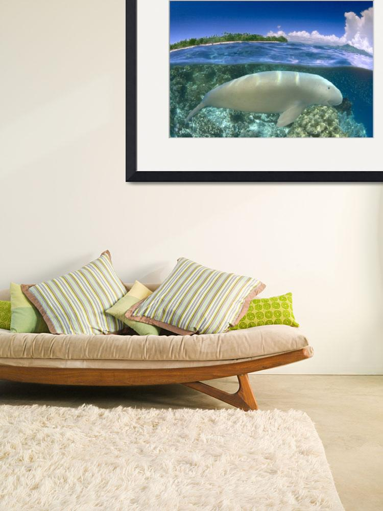 """""""Indonesia, Over/Under Dugong&quot  by DesignPics"""