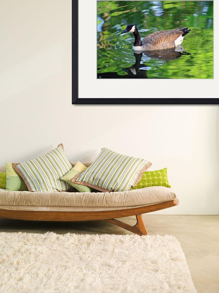 """Canada Goose on Green Lake""  (2012) by KsWorldArt"