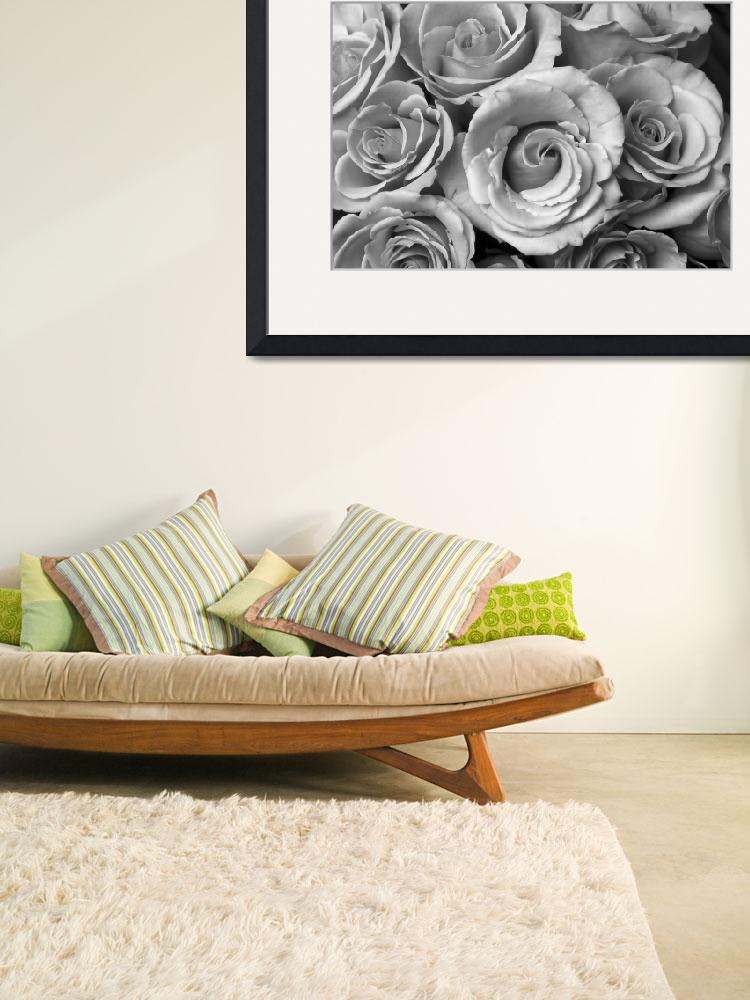 """""""Rose Bouquet in Black and White&quot  (2011) by lightningman"""