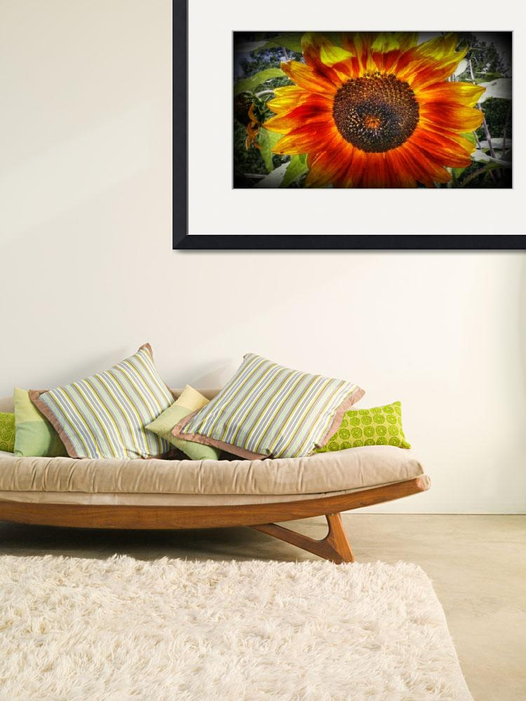"""""""Sunflower1&quot  by Sari_McNamee"""