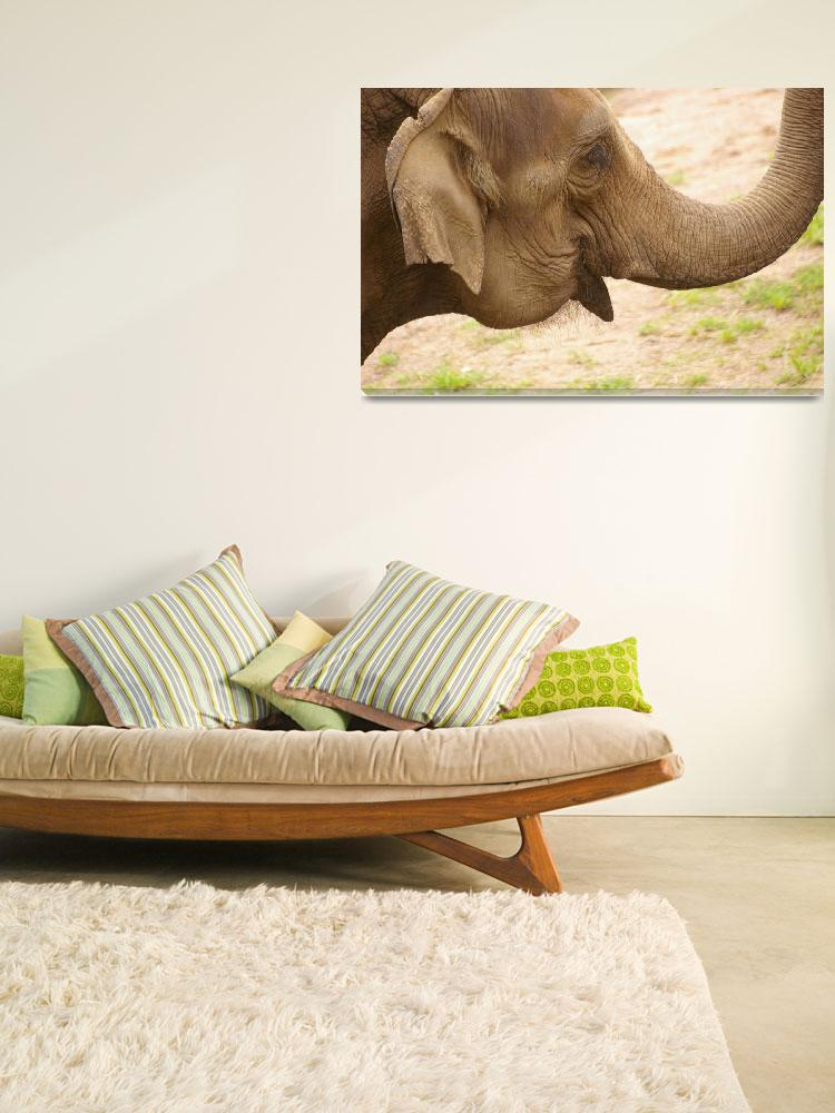 """""""Asian Elephant&quot  (2009) by mellting"""