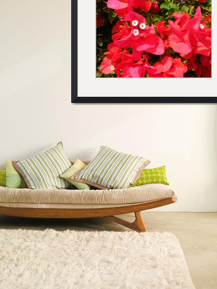 """""""Bougainvillea&quot  (2012) by Hiwalani_Photography"""