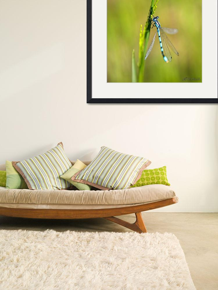 """""""Blue Dragonflies and Green Grass&quot  by RHMiller"""