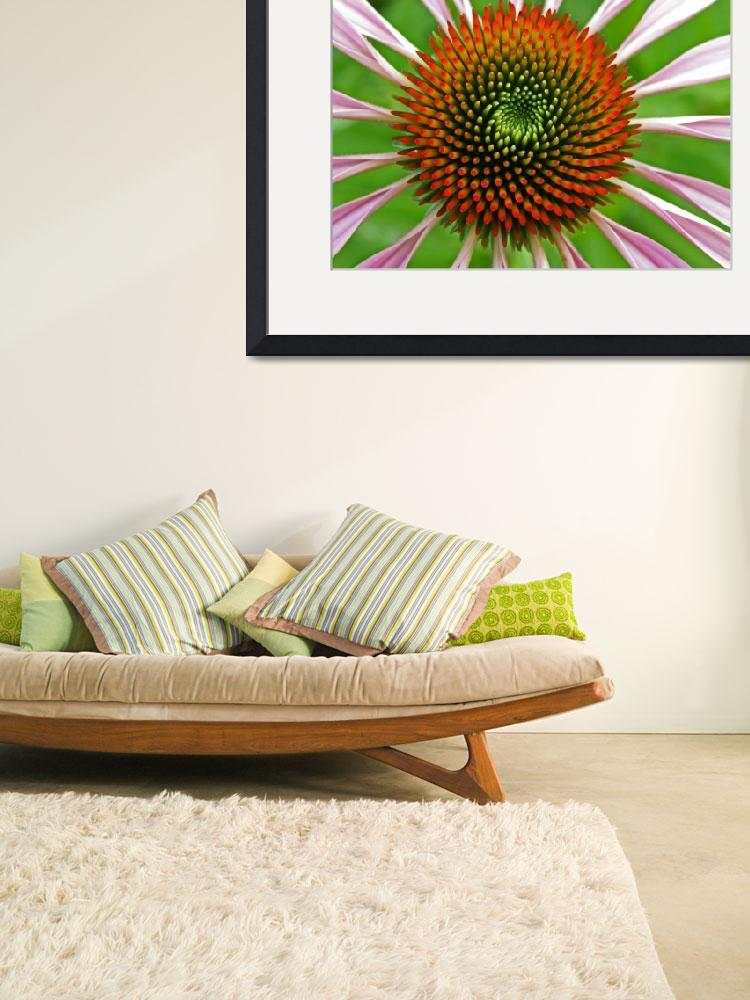 """""""Cone flower&quot  (2009) by newtstew"""