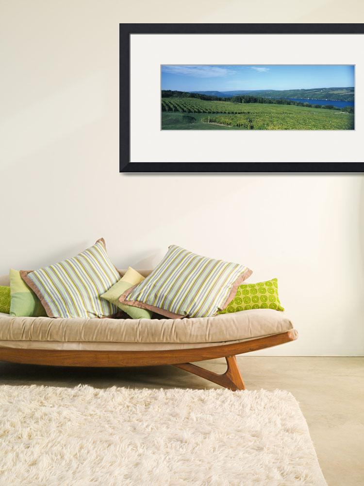 """""""Vineyards Finger Lakes Region NY&quot  by Panoramic_Images"""