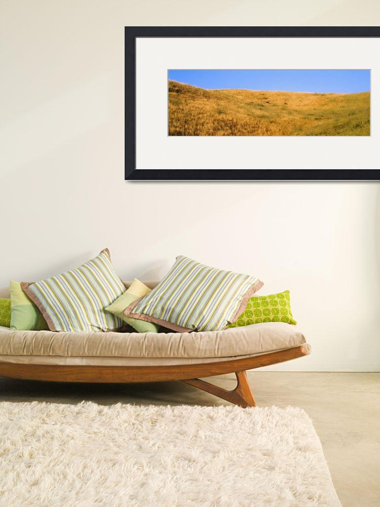 """""""Hillside w/Yellow Grass and Deer CA""""  by Panoramic_Images"""