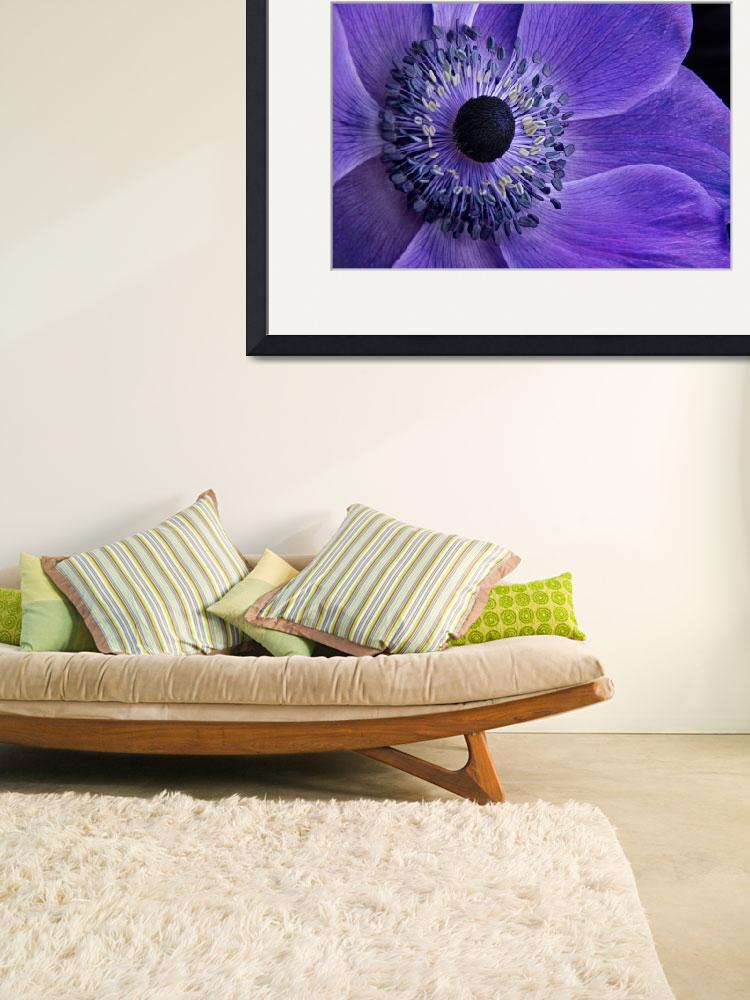 """""""Purple Anemone&quot  (2013) by AnnG"""
