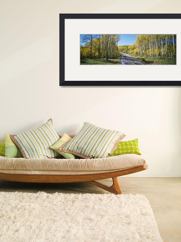 """""""Winding road through aspen forest&quot  by Panoramic_Images"""