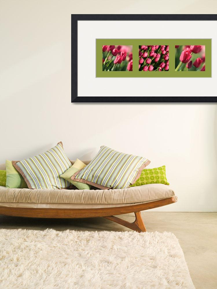 """Pink Tulips in Green Triptych""  (2014) by Groecar"