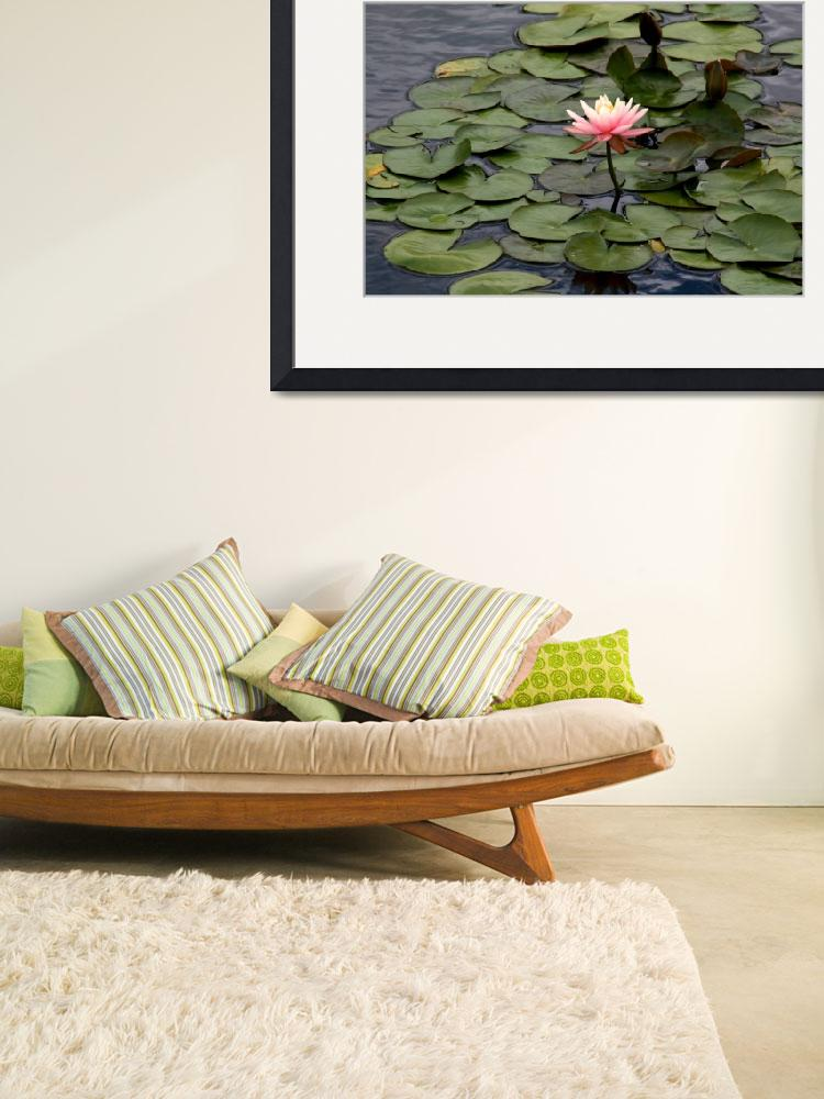 """""""Water Lily 4&quot  (2008) by JBCPhotoDesign"""
