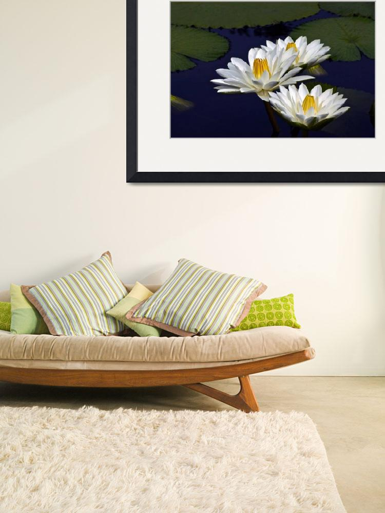 """""""Three White Tropical Water Lilies version 2&quot  (2013) by LightHeart"""