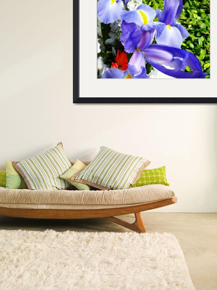 """""""Iris - A Wonder to Behold&quot  (2008) by stevenphill"""