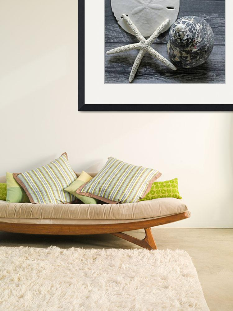 """""""ORL-5608-2 Seashells on Wood&quot  by Aneri"""