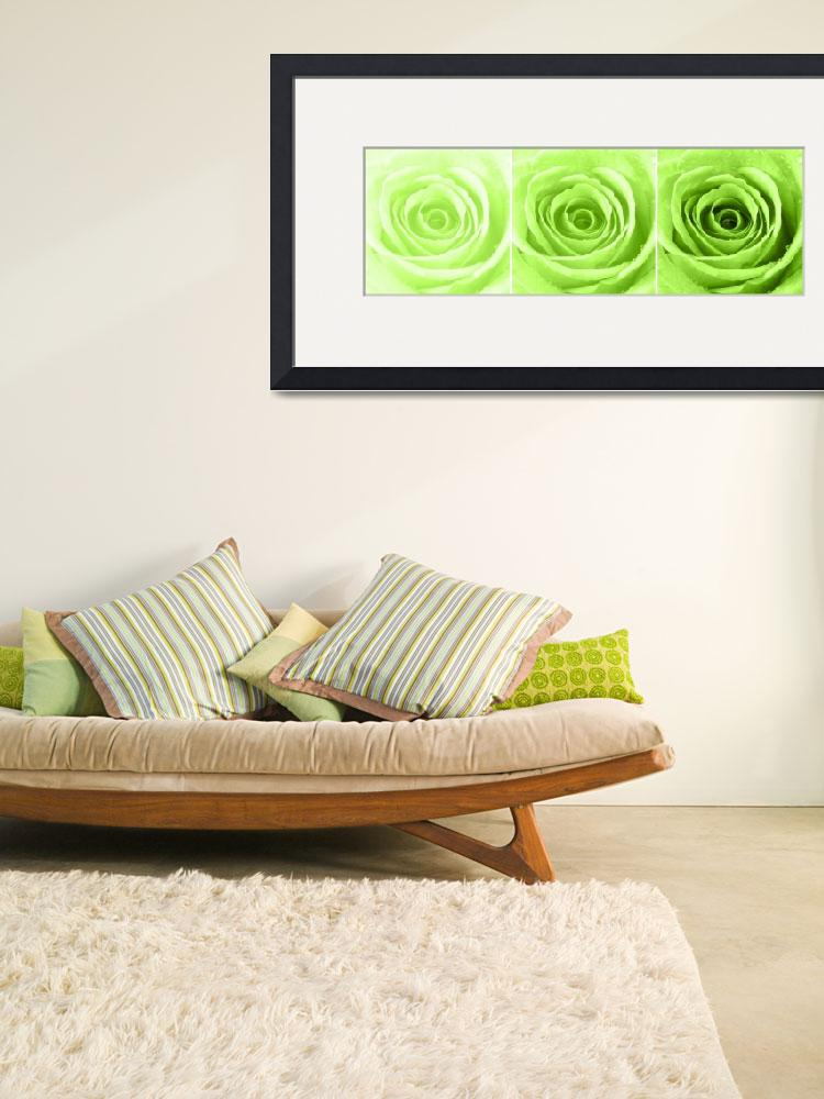 """""""Lime Green Rose with Water Droplets Triptych&quot  (2012) by NatalieKinnear"""