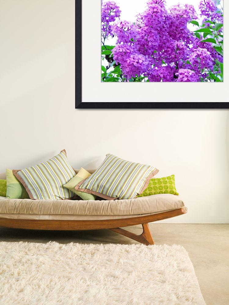 """""""Fragrant Lilacs""""  (2007) by daisyjoan"""