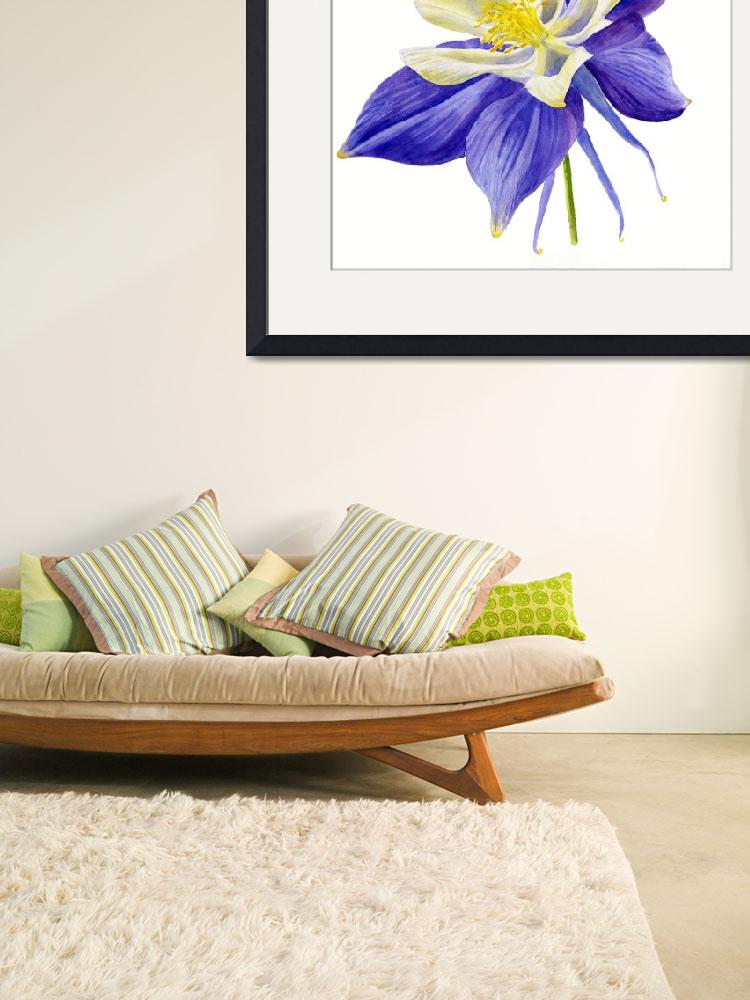"""""""Single Blue Columbine Flower&quot  (2015) by Pacific-NW-Watercolors"""