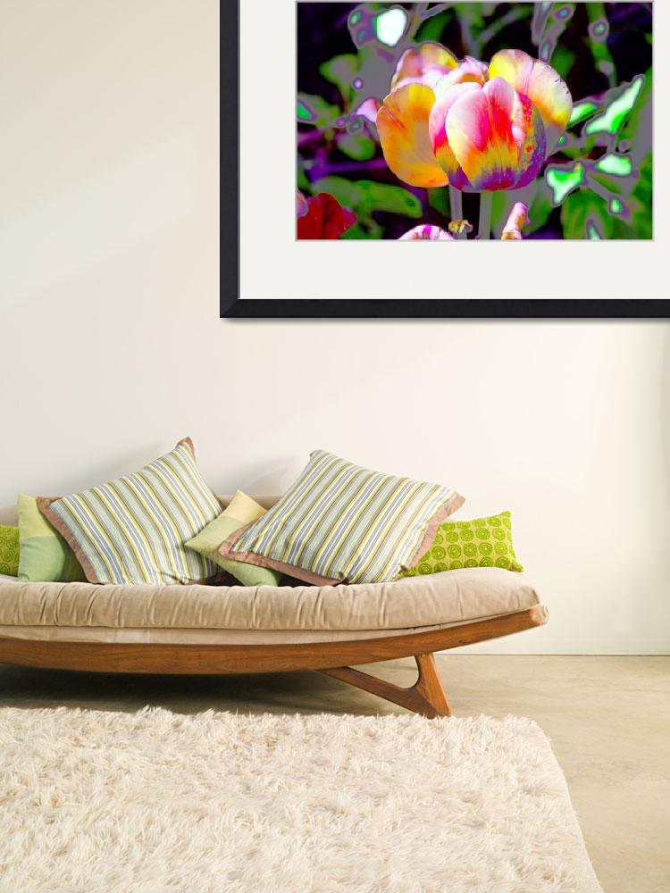 """""""Rainbow Tulip&quot  (2015) by donwright"""