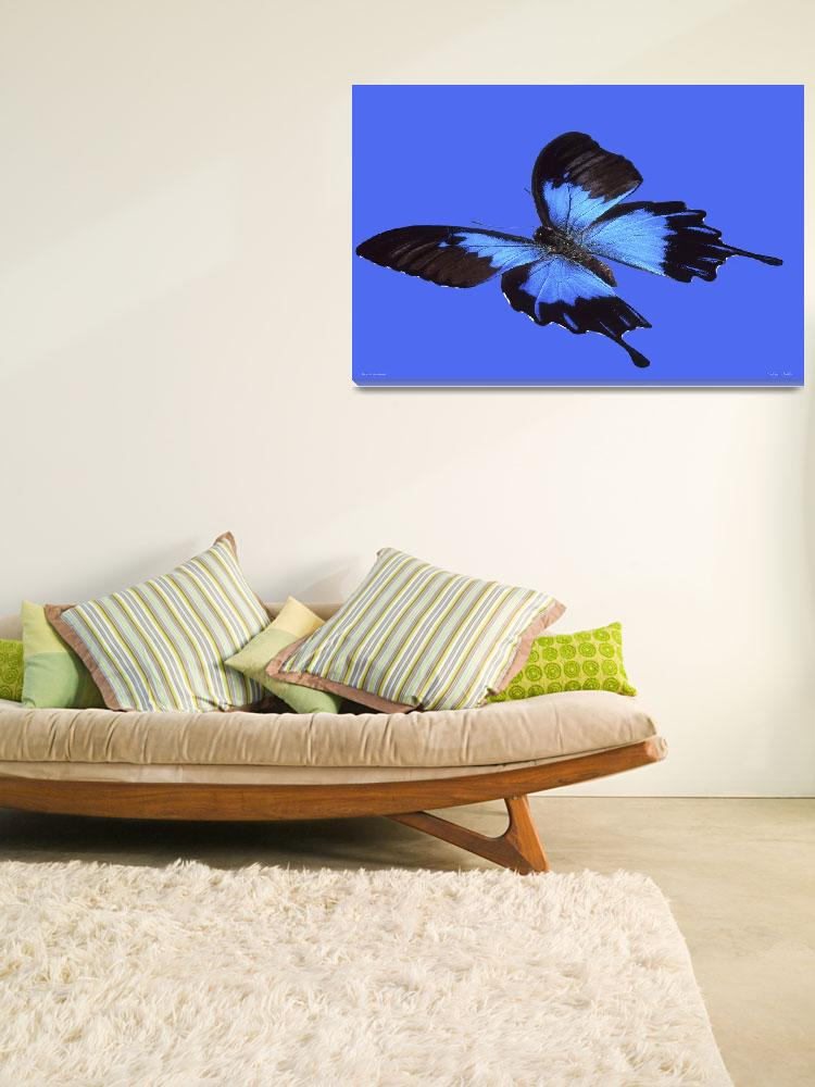 """""""Lm121-2 Blue Mountain Swallowtail""""  (2013) by Williamcastner"""