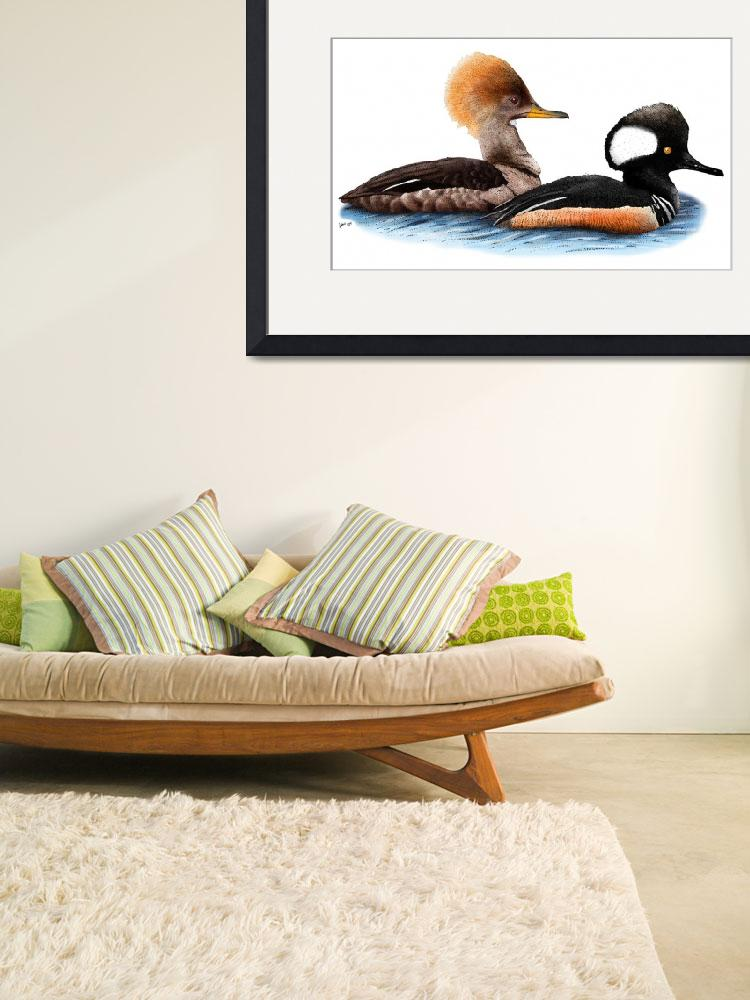 """""""Hooded Mergansers&quot  (2009) by inkart"""