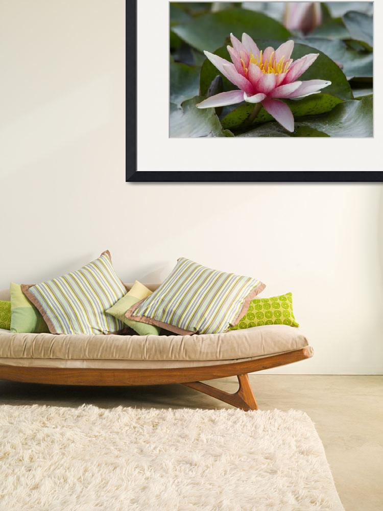 """""""waterlily""""  (2010) by lamich"""
