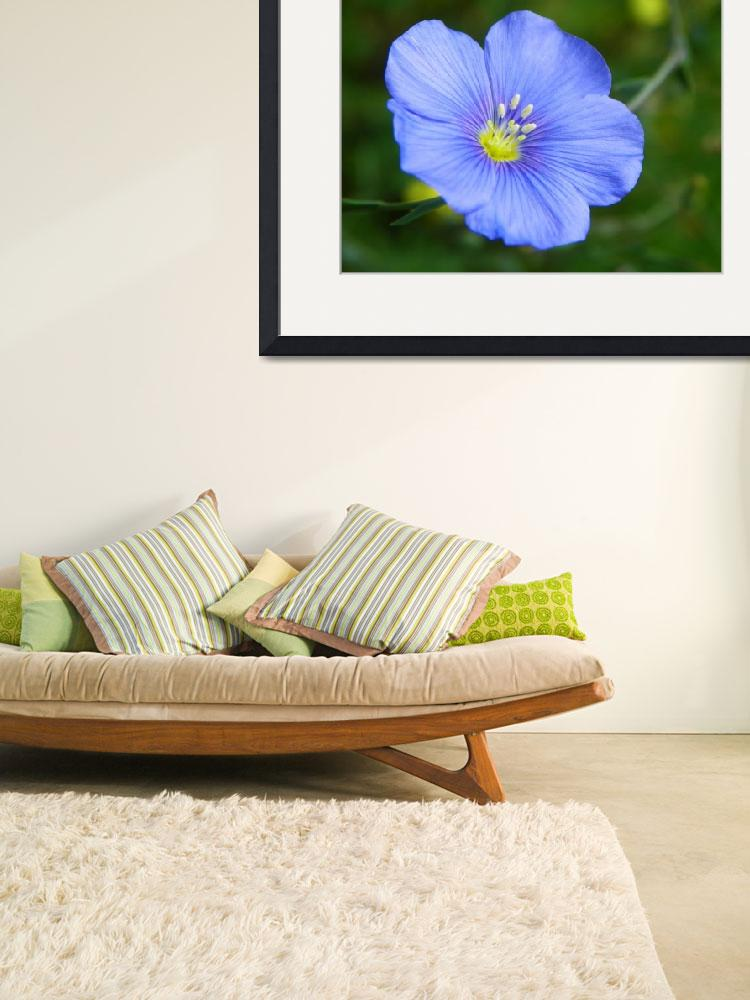 """""""Botanical - Blue Flax - Outdoors Floral&quot  by artsandi"""