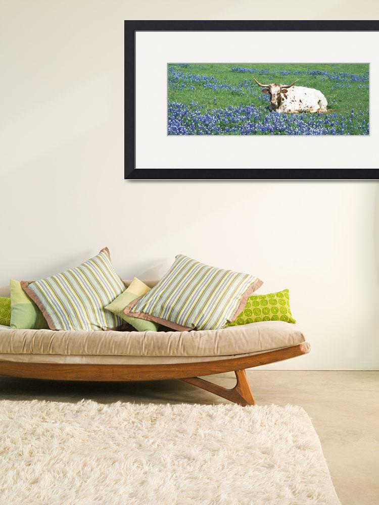 """""""Texas Longhorn cow sitting on a field&quot  by Panoramic_Images"""
