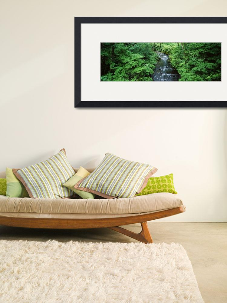 """Stream flowing through lush green brush&quot  by Panoramic_Images"