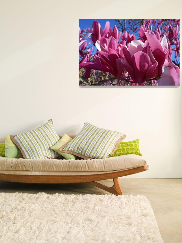 """""""Magnolia Pink Spring Flowers Magnolias Tree""""  (2014) by BasleeTroutman"""