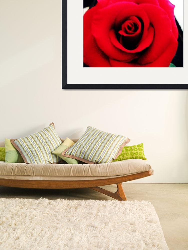 """""""Love is Roses&quot  by LLPhotography"""