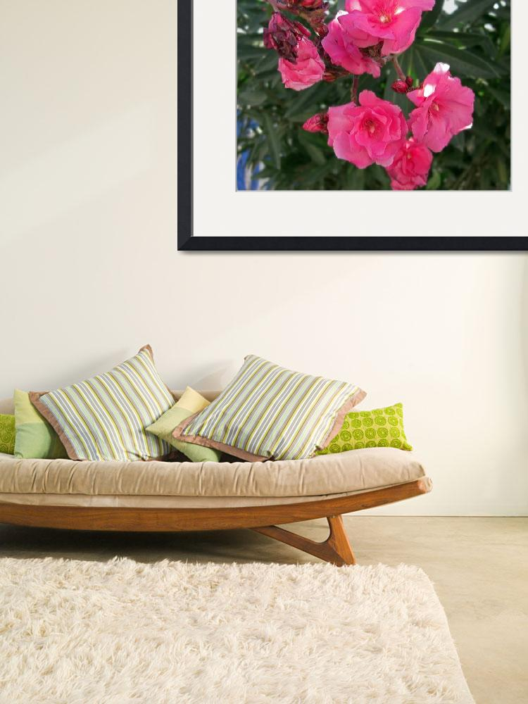 """""""Double Oleander 3&quot  (2009) by ChristopherInMexico"""