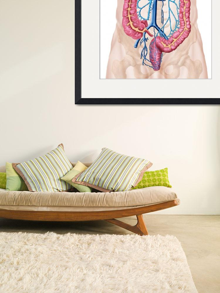 """""""Anatomy of human abdominal vein system&quot  by stocktrekimages"""