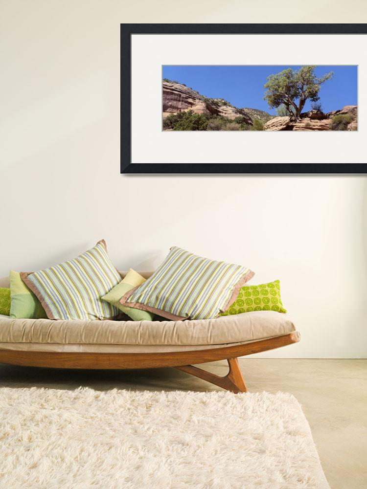 """""""Lone Pinyon Pine Colorado National Monument CO""""  by Panoramic_Images"""