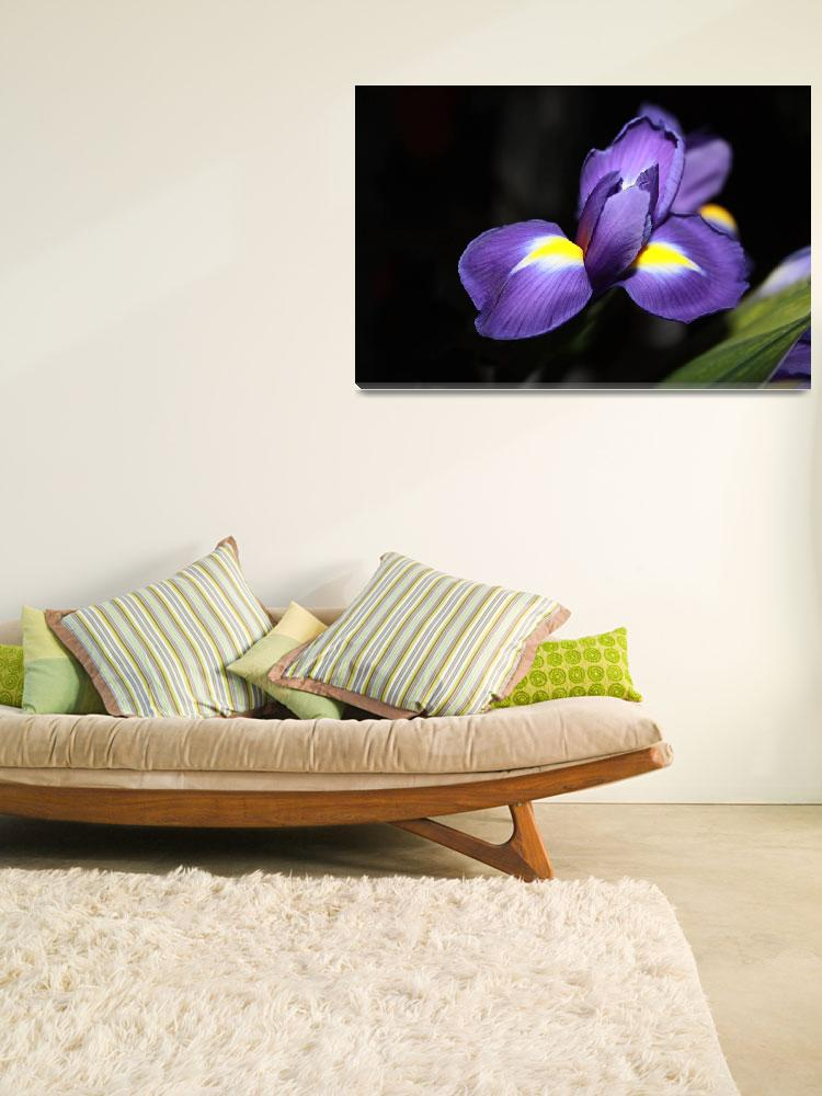 """""""20 Floral-Iris 1&quot  (2008) by willifindunow"""
