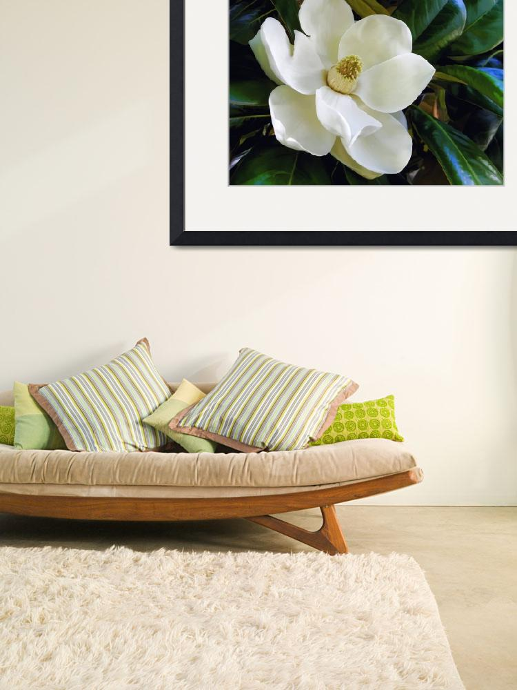 """""""Magnolia Flower&quot  (2009) by Artlife"""