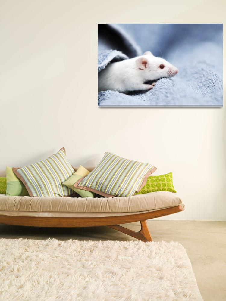 """""""Cute White Mouse""""  (2009) by ldfranklin"""