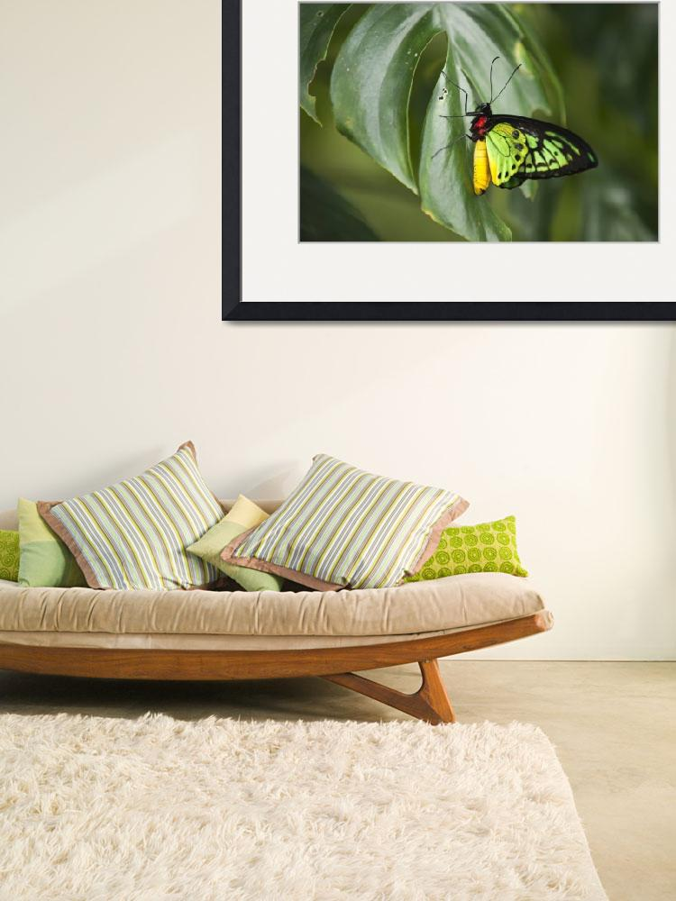 """""""Red yellow green butterfly on green leaf.&quot  by Todikromo"""