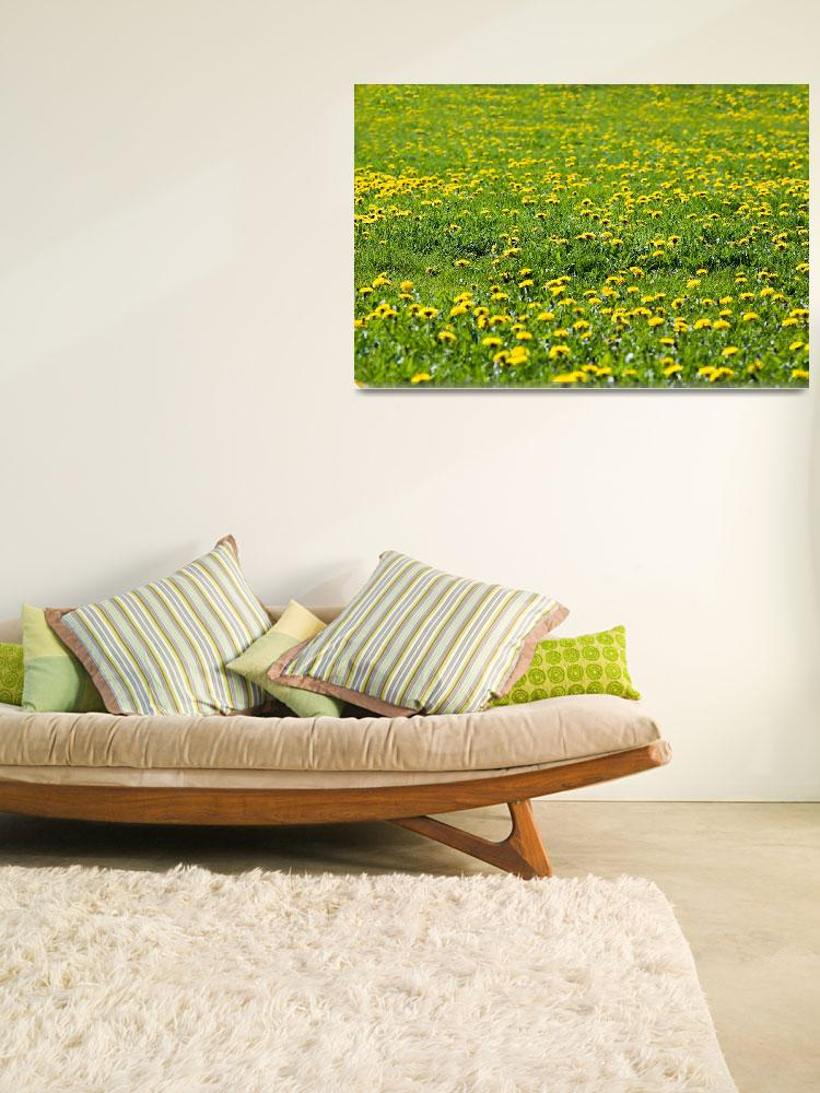 """""""Field of yellow flowers&quot  (2009) by Gel403"""