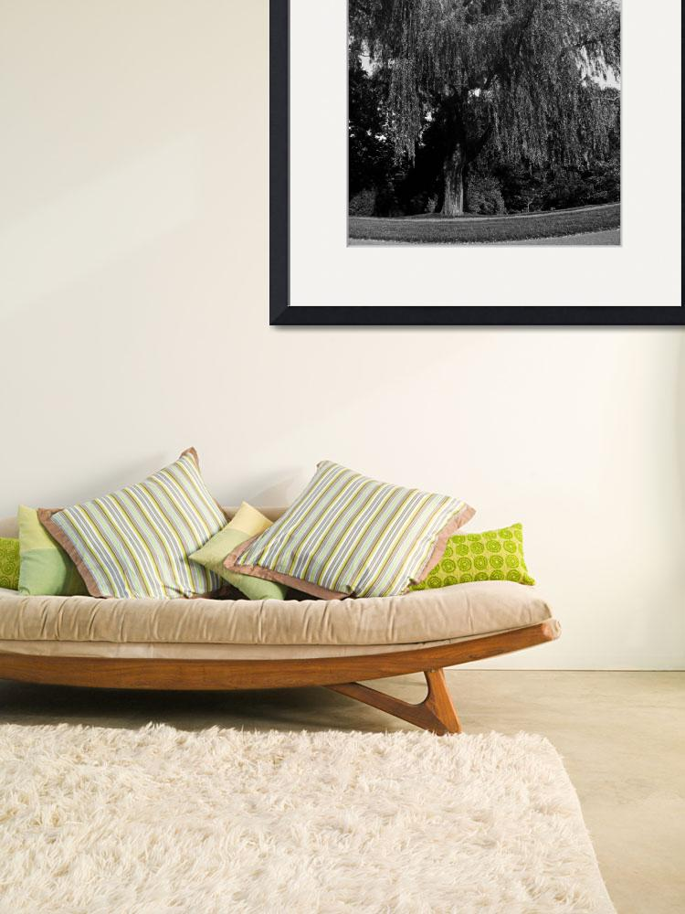 """""""Weeping Willow Tree Zen Garden&quot  (2008) by PhotographsByCarolFAustin"""