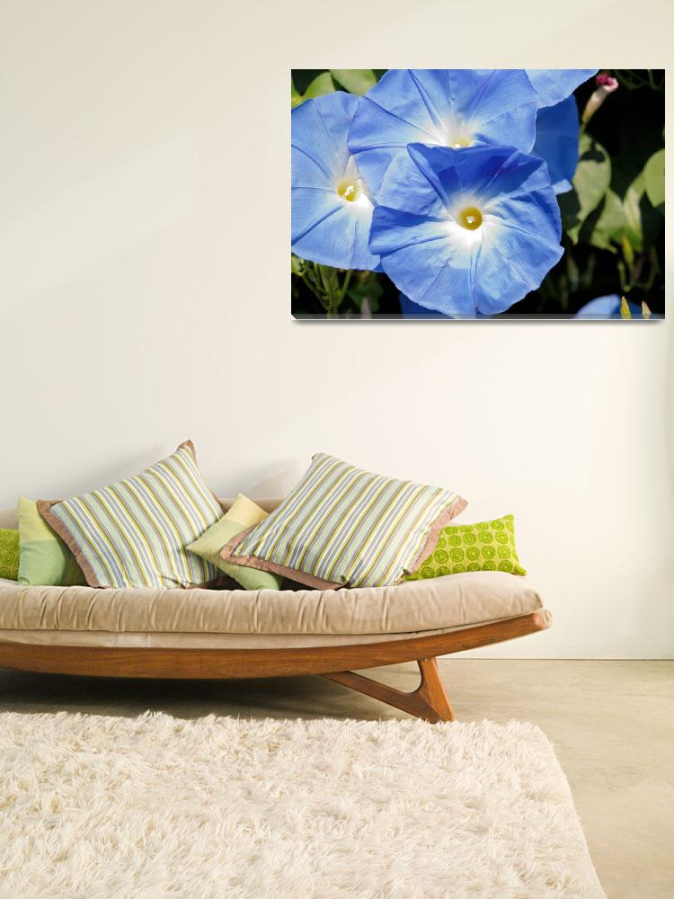 """""""Morning Glory 1""""  (2010) by TouchofGrace"""
