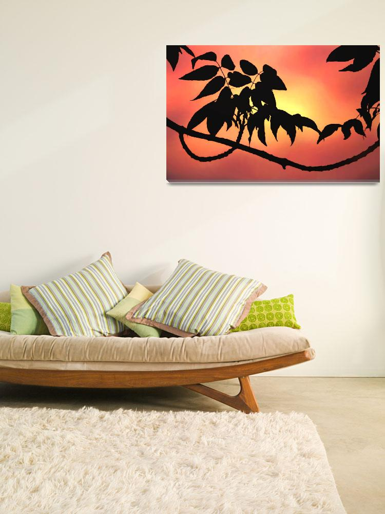 """""""Sunset Silhouette""""  (2009) by jmac"""
