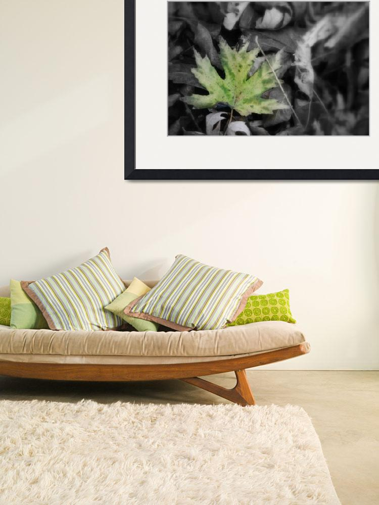 """""""Single Green leaf with black and white leaves""""  (2009) by imaginativeimagery"""