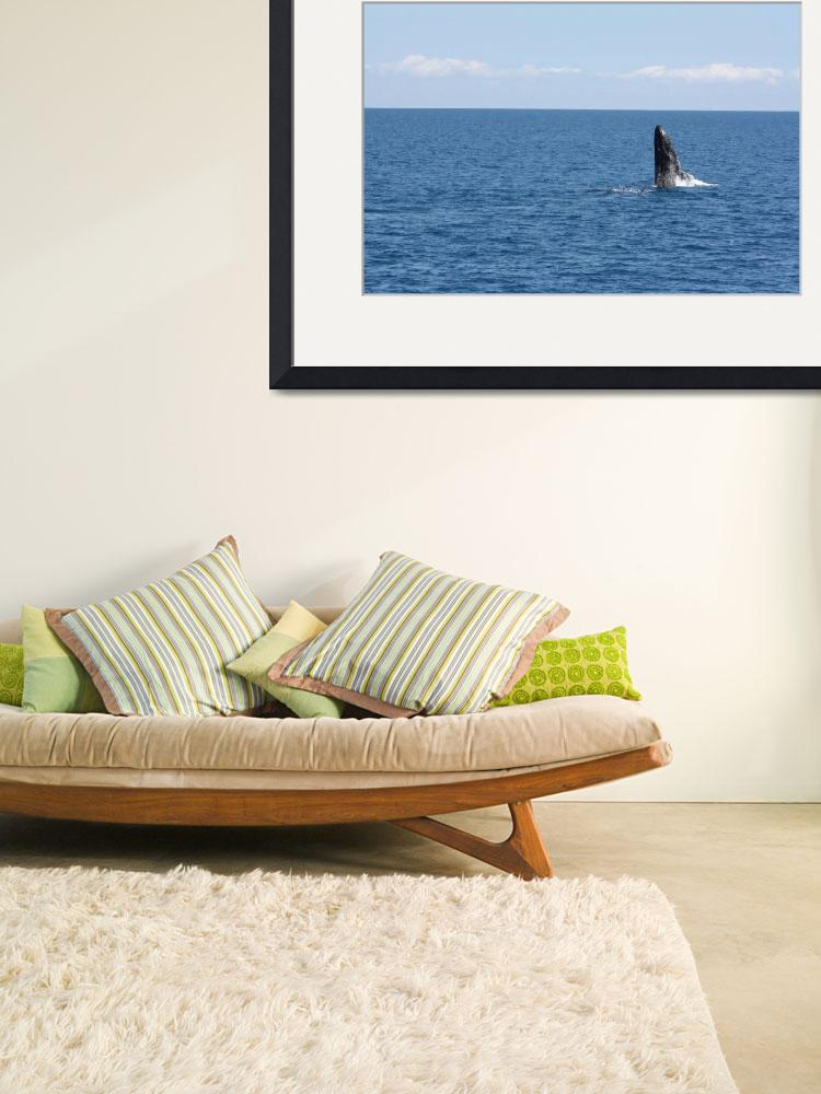 """""""NaP_ Whale Watching085""""  by nevilleprosser"""