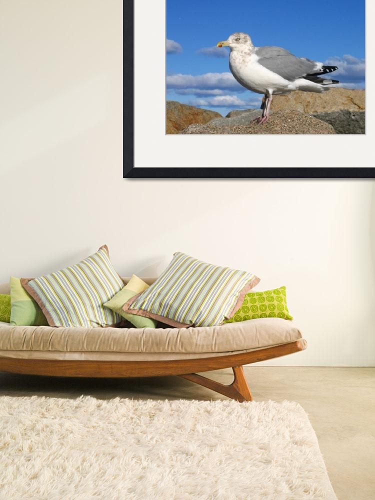 """""""Seagull #1&quot  (2005) by edhoopman"""